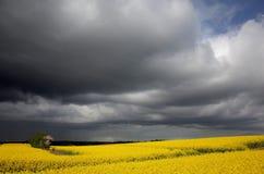 Rapefield debajo de las nubes oscuras Fotografía de archivo libre de regalías
