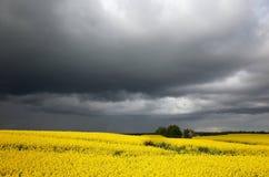 Rapefield sotto le nuvole scure Fotografie Stock