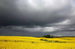 Rapefield under dark clouds Stock Photos