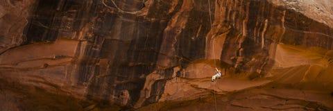 rapelling在橙色峭壁下的攀岩运动员 免版税库存图片