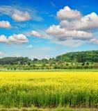Rapeseed śródpolny withcloudy niebieskie niebo niebieska spowodowana pola pełne się chmura dzień zielonych roślin krajobrazu ruch Zdjęcia Stock