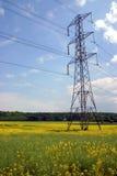 rapeseed опоры поля электричества Стоковые Изображения RF