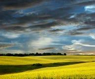 rapeseed поля Стоковое Изображение