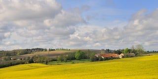 rapeseed деревушки поля Стоковая Фотография RF
