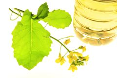 Rapeseed Stock Photography