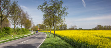 Rapeseed along the via romana near Kalkar Stock Photo