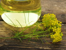 Rapeseed blossom Royalty Free Stock Photography