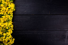 Rapeseed blossoms on black wooden background. The rapeseed is placed on the left side Royalty Free Stock Image