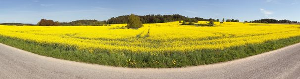 Rapeseed (brassica napus) field and road Stock Photos