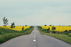Rapeseed crops in the plain 6 Royalty Free Stock Photography