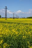 Rapeseed field. Yellow rapeseed field with transmission towers Stock Images