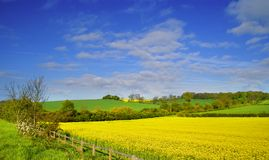 Rapeseed field 2 Royalty Free Stock Photography
