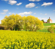 Rapeseed field. In Czech Republic Stock Images