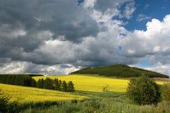 Rapeseed field. In inner Mongolia stock image