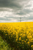 Rapeseed field Royalty Free Stock Photography