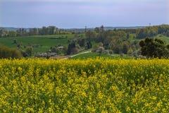 Rapeseed field. In beautiful german region Odenwald stock photography