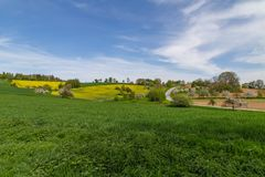 Rapeseed field. In beautiful german region Odenwald stock images