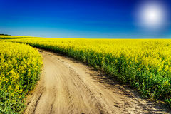 Rapeseed field in the beautiful springtime. Stock Photo