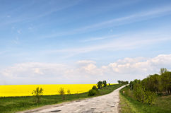 Rapeseed field and blue sky near the road. Patched road near rape field, yellow rapeseed flowers on field with blue sky and clouds before tree line against Royalty Free Stock Photography