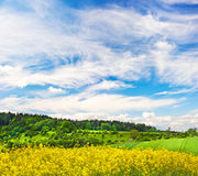 Rapeseed field and cloudy blue sky Royalty Free Stock Image