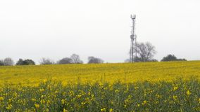Rapeseed field and communication tower under overcast rain.  royalty free stock photo