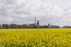 Rapeseed field and Eastham Oil Storage Depot Royalty Free Stock Photography