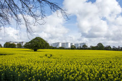 Rapeseed field and Eastham Oil Storage Depot Stock Photography