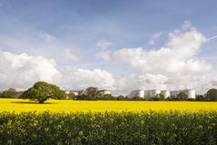 Rapeseed field and Eastham Oil Storage Depot Royalty Free Stock Photos