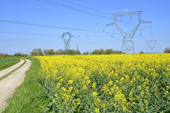 Rapeseed field with electric pylons Royalty Free Stock Photos