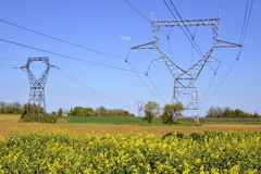 Rapeseed field with electric pylons Stock Photo
