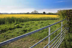 Rapeseed field and farm gate Royalty Free Stock Photos