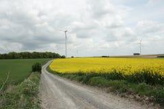 Rapeseed field in France. Rapeseed field in aisne, Picardie region of France royalty free stock photo