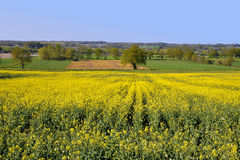 Rapeseed field in France Stock Images