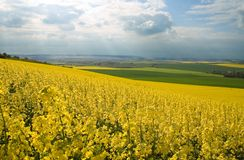 Rapeseed field and green meadows. Panoramic view of rapeseed field and green meadows Royalty Free Stock Photography