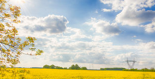 Rapeseed field in Hungary. Brassica napus. Hungarian countryside. Shining sun. Clear blue sky. High voltage towers Royalty Free Stock Photo
