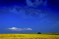 Rapeseed field 1 Stock Images