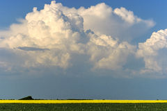 Rapeseed field 3 Royalty Free Stock Image