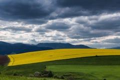 Rapeseed field landscape Stock Image