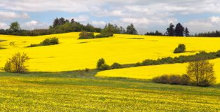 Rapeseed field and meadow Stock Photo