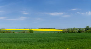 Rapeseed field and meadows against blue sky Stock Photos