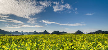 Rapeseed field with mountain Stock Photos