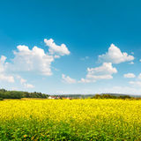 Rapeseed field over cloudy blue sky. Beautiful countryside lands Royalty Free Stock Photo