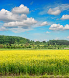 Rapeseed field over cloudy blue sky Stock Photo
