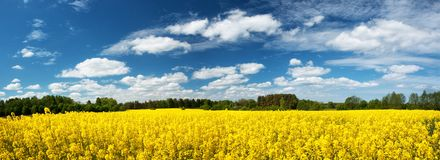 Rapeseed field panorama with beautiul sky Stock Photos