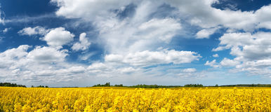 Rapeseed field panorama with beautiul sky Stock Photo