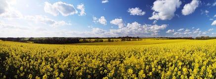 Rapeseed field panorama Royalty Free Stock Photos