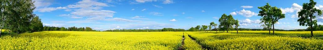 Rapeseed field panorama Stock Photos