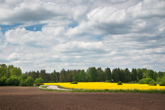 Rapeseed field and road with beautiul sky Stock Photo