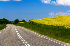 Rapeseed field and road Stock Image