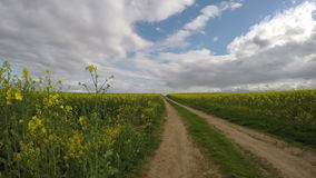 Rapeseed field and rural gravel road in spring. timelapse 4K stock video